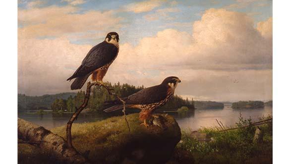 Ferdinand von Wright, Nuolihaukkapari, 1892. Kuvassa kaksi haukkaa, joista toinen istuu oksalla ja toinen kallion päällä. Taustalla järvimaisema.